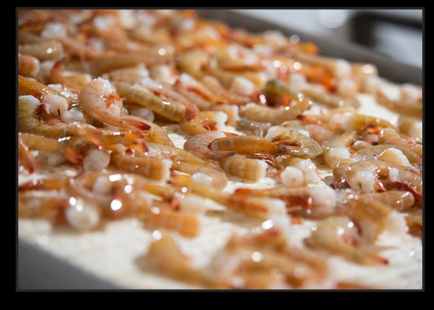 Layered frozen, fresh shrimp